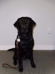 Hebe - Nicky's Guide Dog